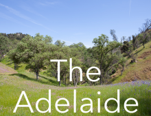 The Adelaide